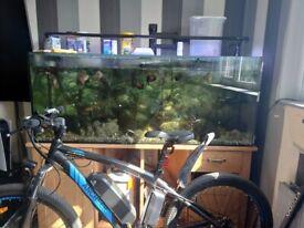 300 litre tropical fish tank full setup 8 Oscars 4 barbs 1 plek plus other fish