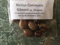castor oil seeds 12 (ricinus communis)