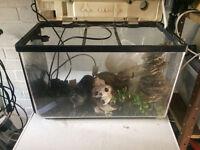 Aquarium with hinged lid and integral light, pump etc.