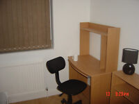 Single room available now