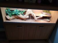 2 beautiful female bearded dragons with 4ft Viv, full set up and matching cabinet underneath