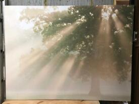 Beautiful (big!) picture of tree and rays of sun from Next