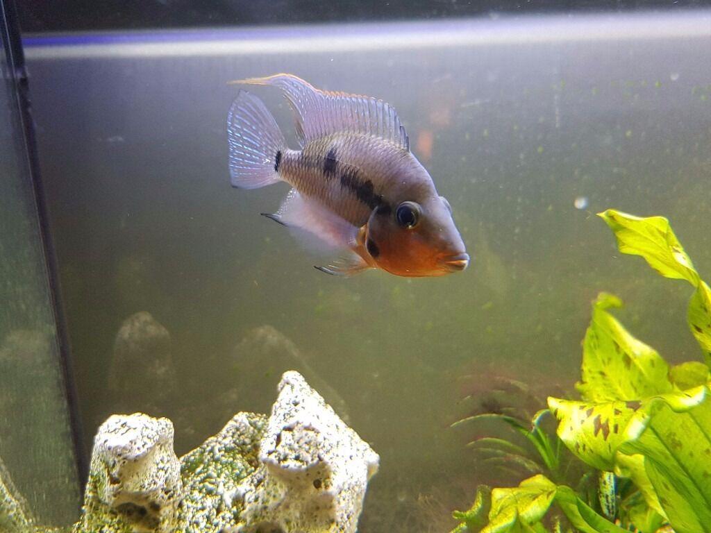 Fish aquarium edmonton - Elliot Fish For Free