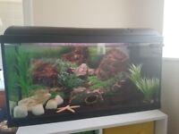 Fish Tank/ Aquarium/ Setup