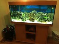Tropical fish tank 350L