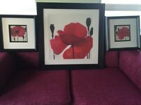 Pictures with red poppy