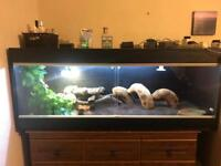 Ackie monitor with full setup for sale