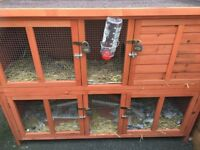 RABBIT HUTCH PLUS
