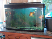 Complete 120 litre cold water fish tank setup.