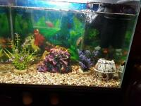 2 tanks up for sale