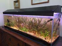 "4ft Aquarium (48"" Long x 12"" Wide x 15"" Tall) + Hood + All Livestock (Fish, Shrimp, Snails) + Heater"