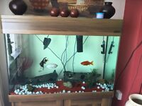 Large fish tank includes everything in pic fish included REDUCED TO £170 need gone asap