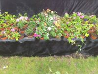 5 trays 68 assorted garden plants and flowers