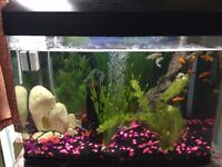 Tropical Fish tank and Accessories for sale