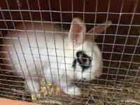 Beautiful male Bunny
