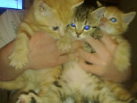 Beautiful kittens ready to be sold to good homes
