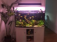 TROPICAL FISH TANK WITH STAND FOR SALE