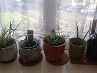 Various plants inc Aloe Vera and Orchids
