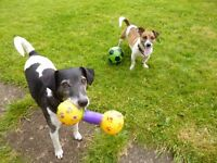 PET SITTING/ DOG WALKING IN HORFIELD, BRISTOL AND SURROUNDING AREAS