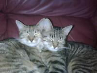 2 female cats sisters