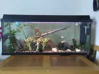 3ft fish tank with 30 + tropical fish