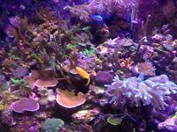 blue birds nest coral