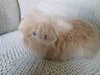 stunning beautiful mini lop plushies bunnies