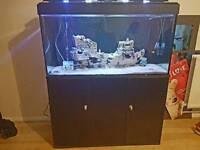 3 ft fish tank aquarium