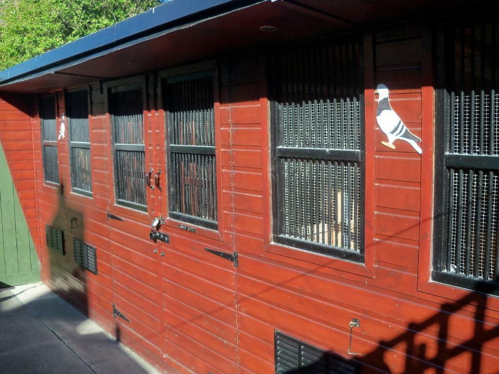 Pigeon Loft For Sale In Middlesbrough North Yorkshire