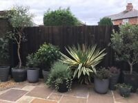 Still Wanted-trees and evergreen plants for reasonable prices to create a small memorial garden