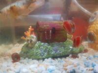 ramshorn snails for free