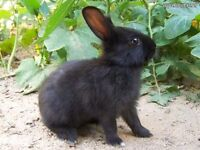 Black indoor rabbit and cage