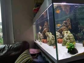 Aqua vogue 247l aquarium fish tank