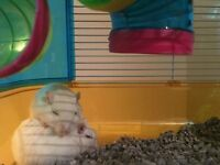 2 male gerbils and their cage for sale