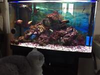 Marine fish tank 125l