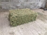 Conventional Bale Meadow Hay for horses, cattle, sheep