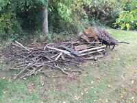 Firewood large pile