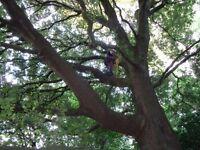 Tree surgeon /gardener /complete property services
