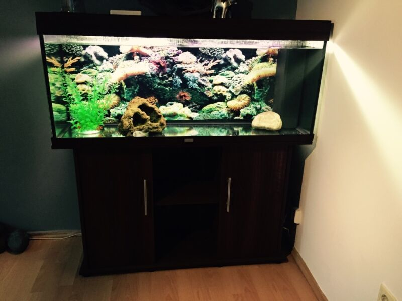 juwel240 aquarium in n rnberg s dstadt aquarium und aquaristikzubeh r g nstig ebay. Black Bedroom Furniture Sets. Home Design Ideas