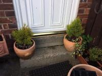 2 shell pots and a long pot