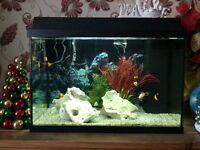 Jewel relied 600 tropical aquarium.