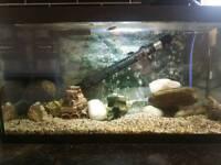 Fish tank / Aquarium / 2ft / tropical / cold water