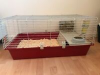 2 female guinea pigs and large cage