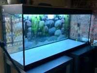 Fluval Roma 240litre fish tank with Fluval 305 external filter and all accessories