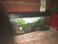 3ft fish tank. NEED IT GONE ASAP!