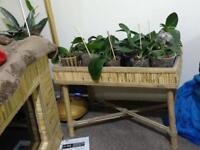 Unique bamboo plant table.