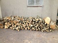 Logs from large sycamore tree. Over 5 tons or £30 per ton / £ 120 for the lot