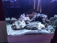 Red Sea max 130d marine tank aquarium set up