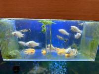 Baby fish for sale