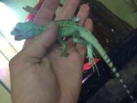 Basilisk/ Jesus Christ Lizard